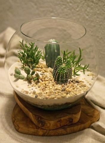 kaktusy w pustynnym terrarium