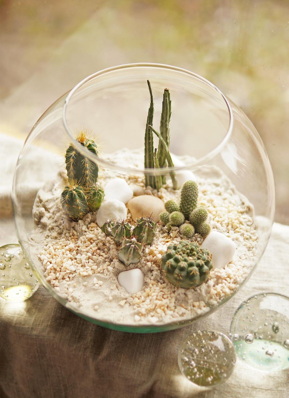 kaktusy w szklanym ekosystemie pustynnym