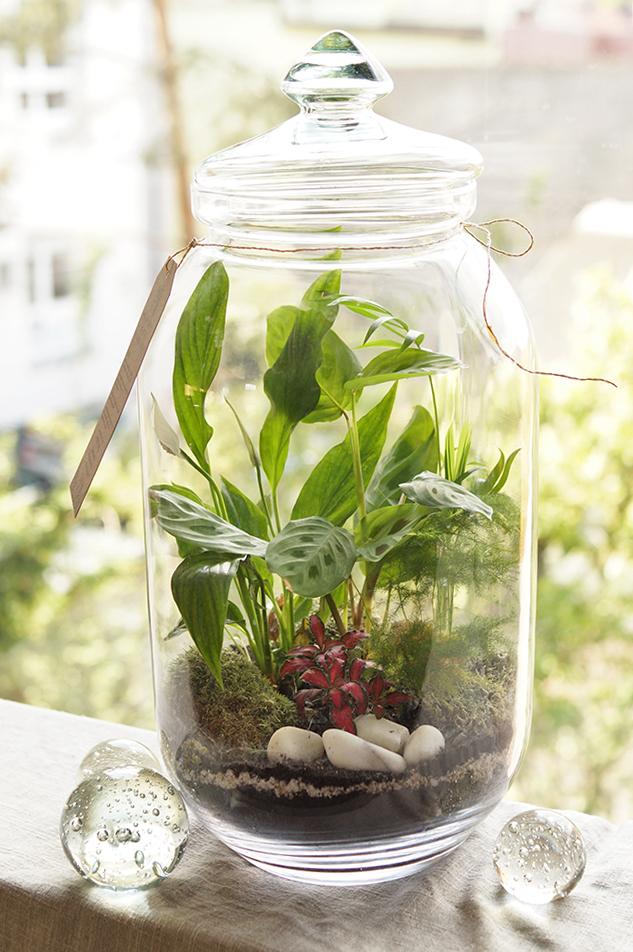 mossarium jungle w szklanym słoju