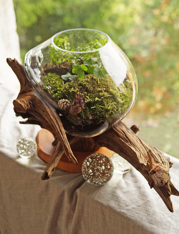 zielony las w szklanej misie na korzeniu