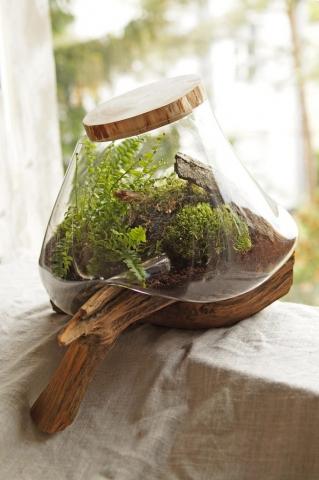 niczym leśna, szklana kropla spływająca z drewna