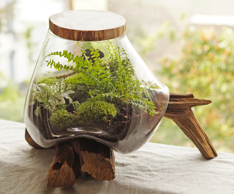 mchy i paproć otulone szkłem na podstawie z korzenia