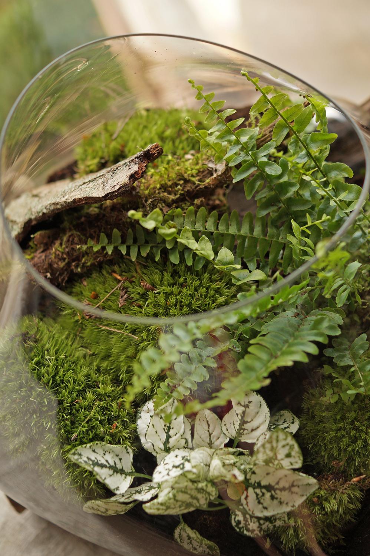 zielone wnętrze szklanej kuli