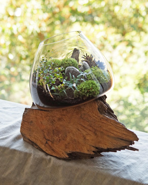mossarium w naczyniu zatopionym w kawałku drewna